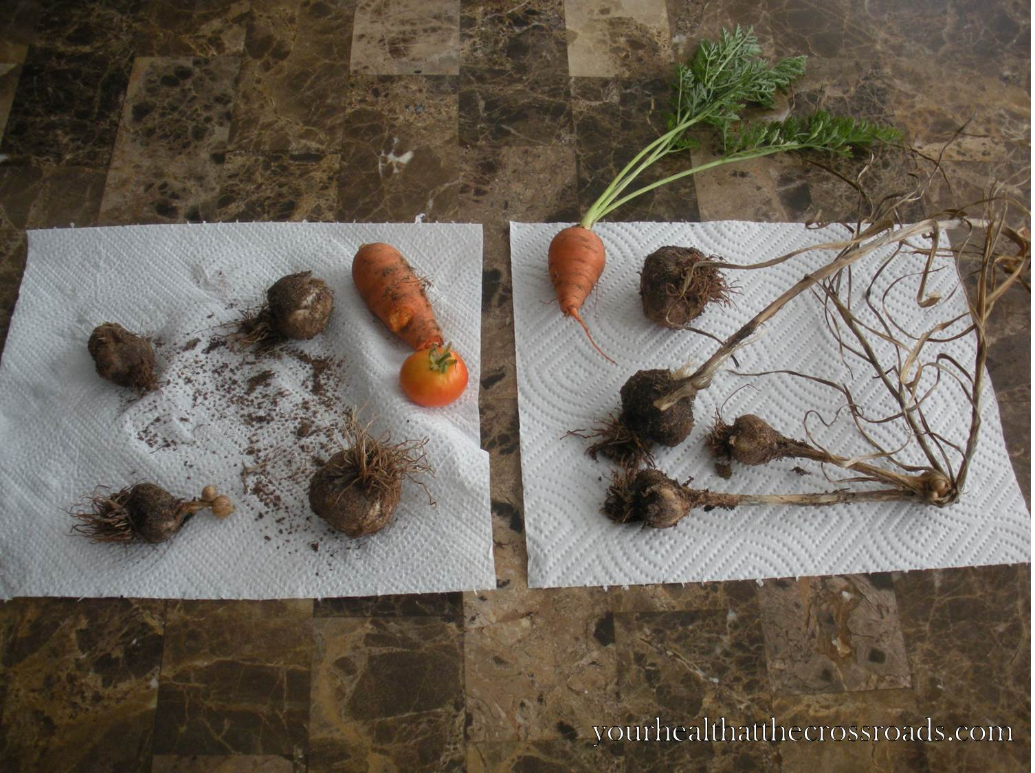 We Picked This From Our Garden – 5 July