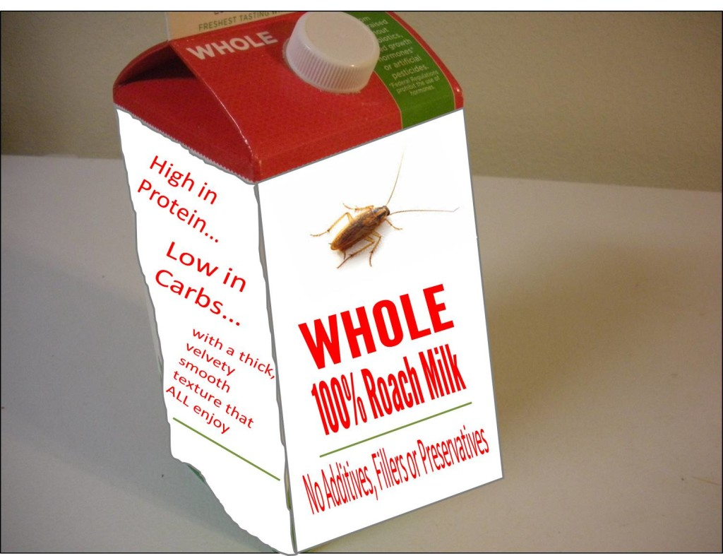 Why I'm Not Excited About Drinking Roach Milk